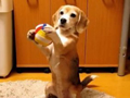 puppy_plays_catch