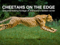 cheetahs on the edge