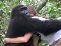 gorillas-reunited
