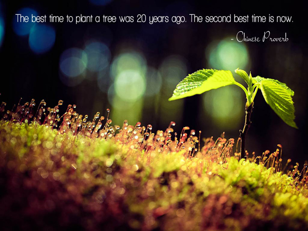 best-time-to-plant-a-tree