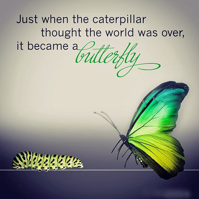 Just when the caterpillar thought the world was over it became a butterfly