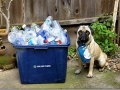 green_pug_recycles
