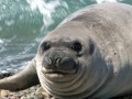 horrifying-planet-seal