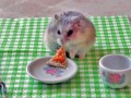 tiny-hamster-eating-pizza